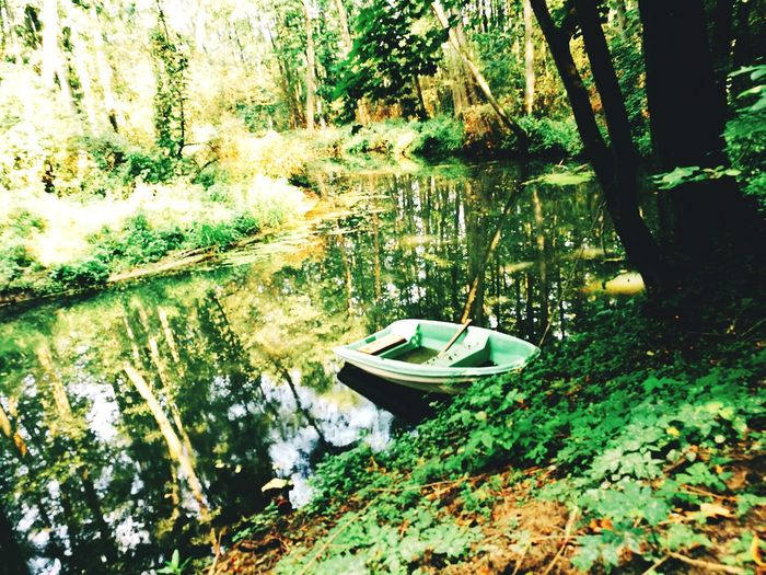river Tree Water Nautical Vessel Leaf Lake Floating On Water High Angle View Grass Plant Green Color Pedal Boat Boat