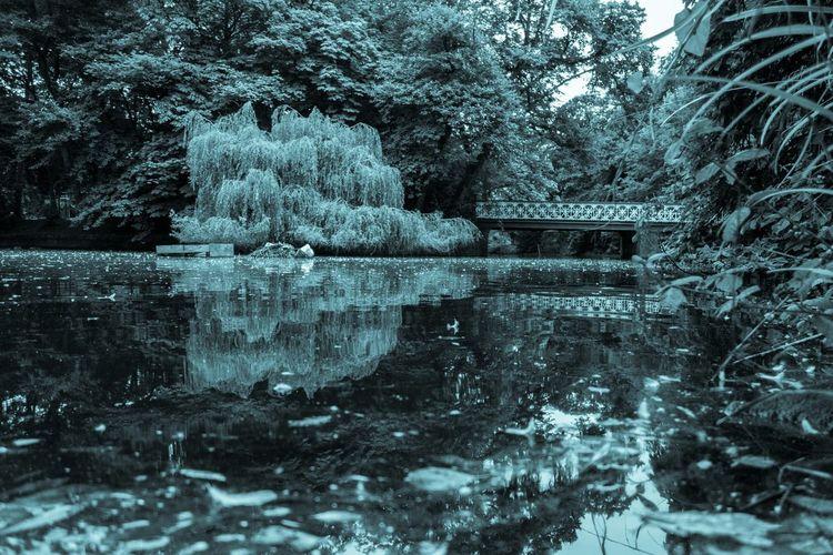 Botanic Gardens Cyanotype