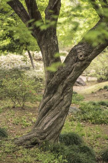 Tree trunk in a field