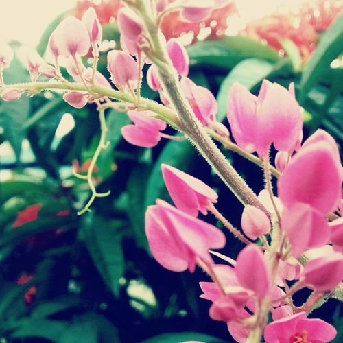 Wildflowers Macro Agartala Garden