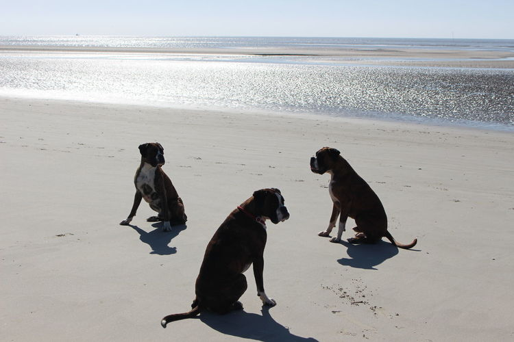 Boxers sitting on shore at beach against wadden sea