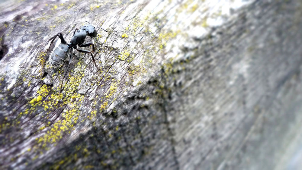 Animal Themes Animal Wildlife Animals In The Wild Ant Close-up Day Insect Nature No People One Animal Outdoors Tree Trunk Animal Antenna Rough Textured