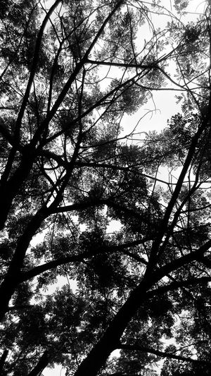 Hello World Check This Out! Relaxing Gazing At Nature Nature_collection Showcase July Nature Photography Tree_collection  Fine Art Photography Tree Silhouettes Tree Branches Against The Sky Sky_collection Photo Of The Day EyeEm Best Shots EyeEm Best Shots - Trees Black & White Still Shots Captured By Gionee Elife E7 Mini Welcome To Black