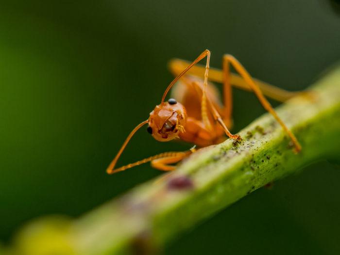 Close-up of ant on stem