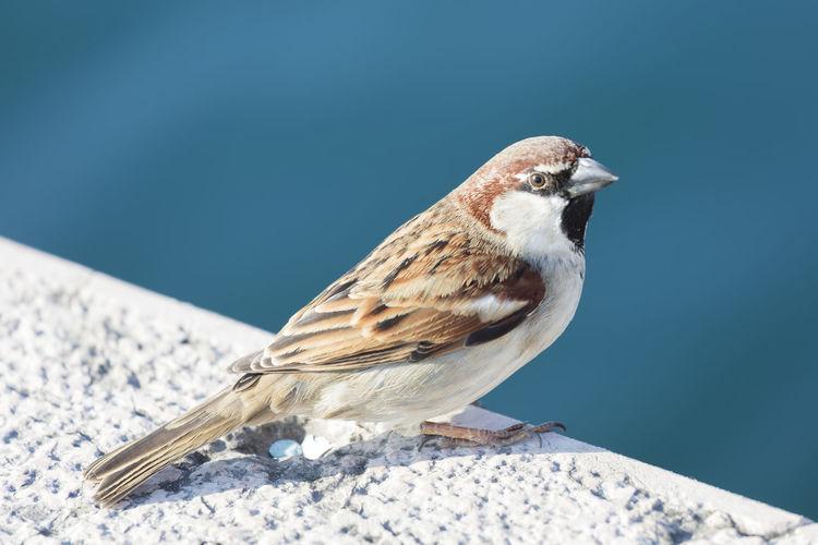 Sparrow at park