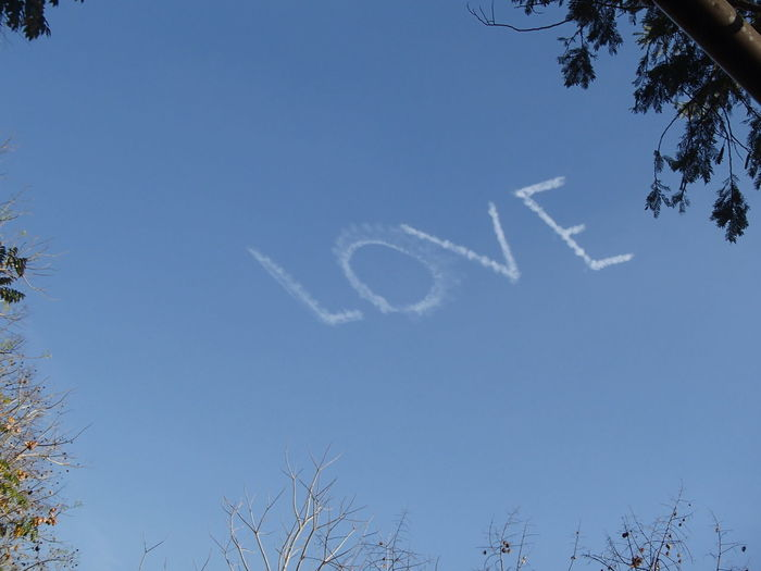 Blue Branch Clear Sky Love Love Is In The Air Low Angle View No People Sky Tree Words In Sky