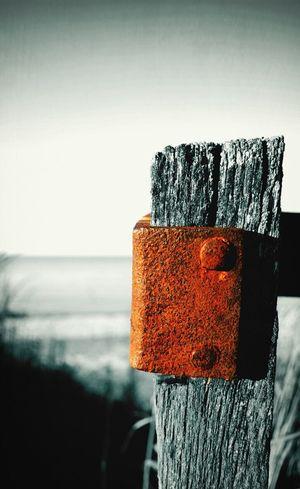 In Rust, We Trust Rust Colour Splash Black & White
