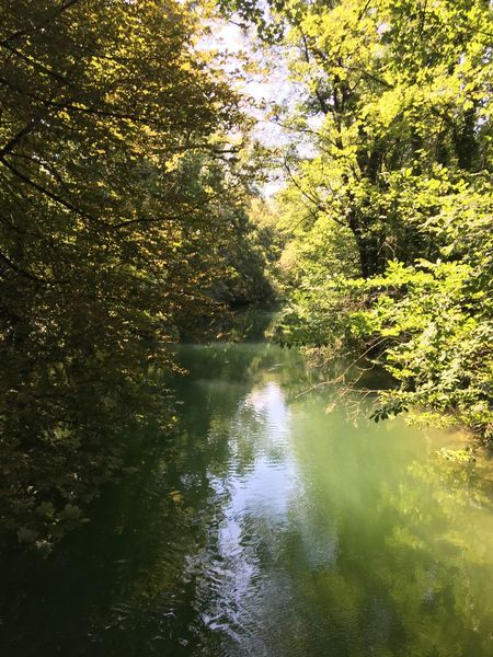 Isar fließt durch die Isarauen Water Reflection Tree Plant Lake Nature The Great Outdoors - 2018 EyeEm Awards Sunlight Tranquility Beauty In Nature Waterfront Scenics - Nature Outdoors Tranquil Scene Green Color Sky Day Non-urban Scene