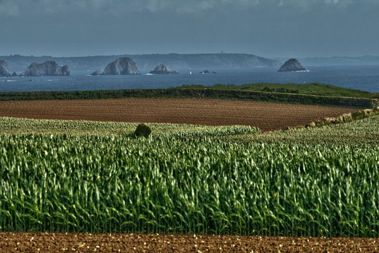 Scenic view of agricultural field by sea