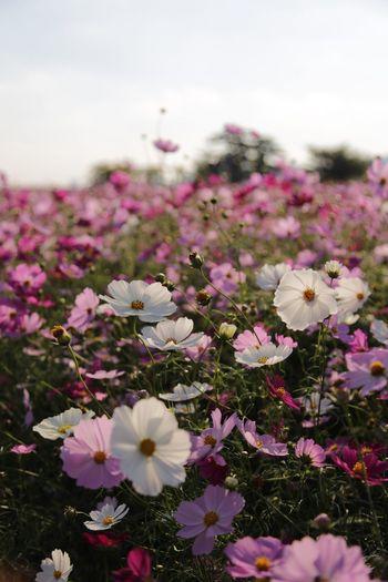 Sommergefühle EOS 6D EF 24-105mm Flower Landscape
