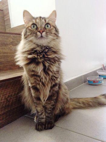 Iztli Cats Cat Lovers Adoptanocompres Ojazos