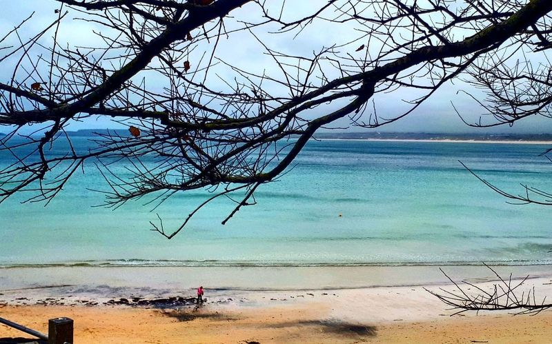Beach Sand Sea Water Nature Beauty In Nature Tree Sky Day Outdoors Travel Destinations Blue Vacations Cornwall Photography Cornwall Life England Countryside Beach Photography Beach Day Beach Walk Sea Life Beach Life Beauty In Nature Seascape_lovers Vacations Landscape