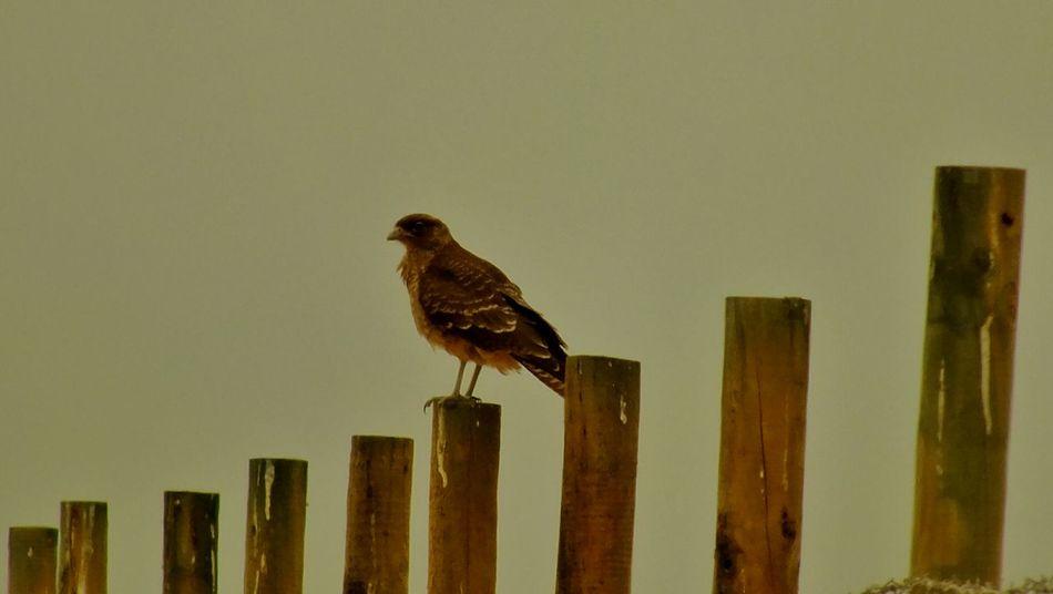 Wildlife Birds EyeEm Birds