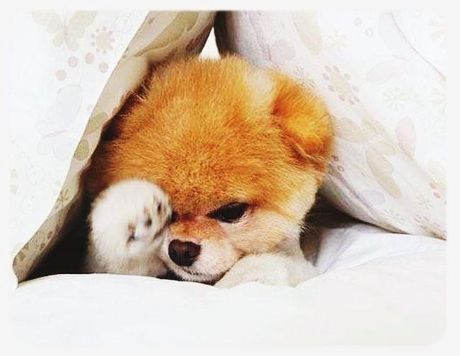 Trop Mignon Boo! Dog
