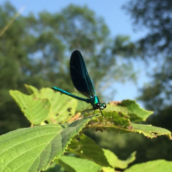 Outdoors Forest Tree Insect One Animal Animals In The Wild Leaf Close-up Focus On Foreground No People Animal Wildlife Damselfly Beauty In Nature