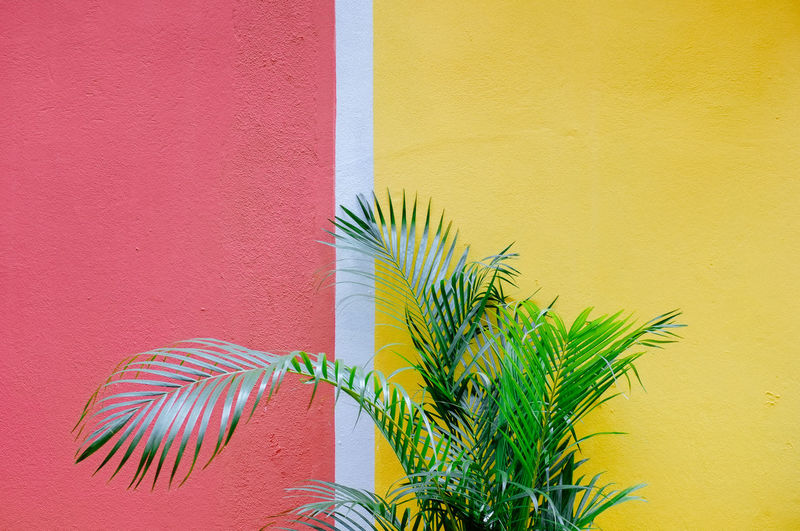 Close-up of palm leaf against yellow and pink wall