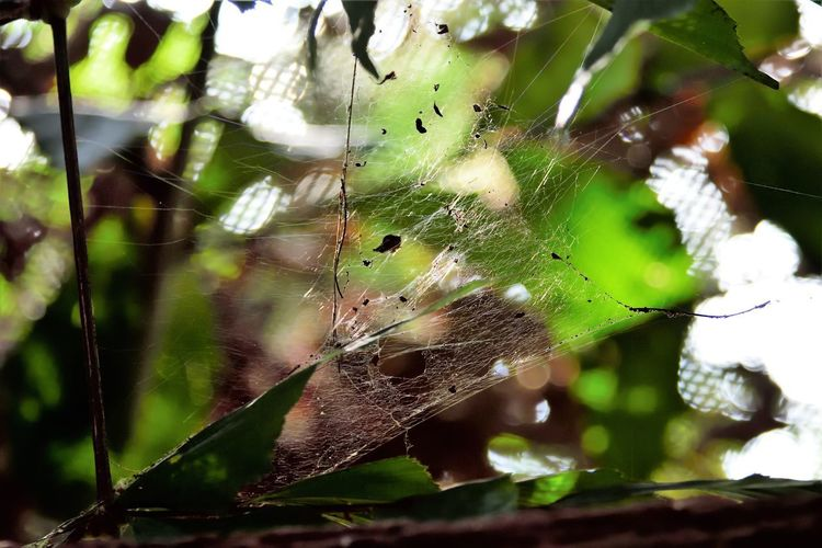 Wildlife and forestry Animal Animal Themes Animal Wildlife Animals In The Wild Close-up Day Focus On Foreground Fragility Green Color Growth Insect Invertebrate Leaf Leaves Nature No People One Animal Outdoors Plant Plant Part Spider Spider Web Web