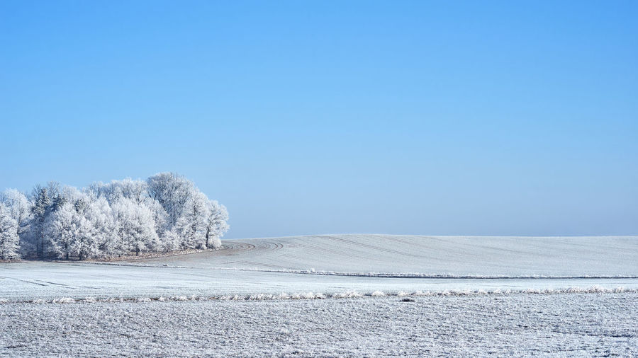 Calm winter landscape, field and dense forest covered with frost against a background of blue sky