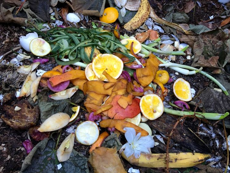 Fresh bio waste and compost with orange peels in the garden Blooming Blossom Botany Compost Pile Cucumber Day Flower Flower Head Fragility Freshness Fruits And Vegetables Growth High Angle View Leaf Multi Colored Nature Orange Peels Outdoors Petal Pink Color Rottenfeed Rotterdam Tranquility Wasting Time Yellow Color