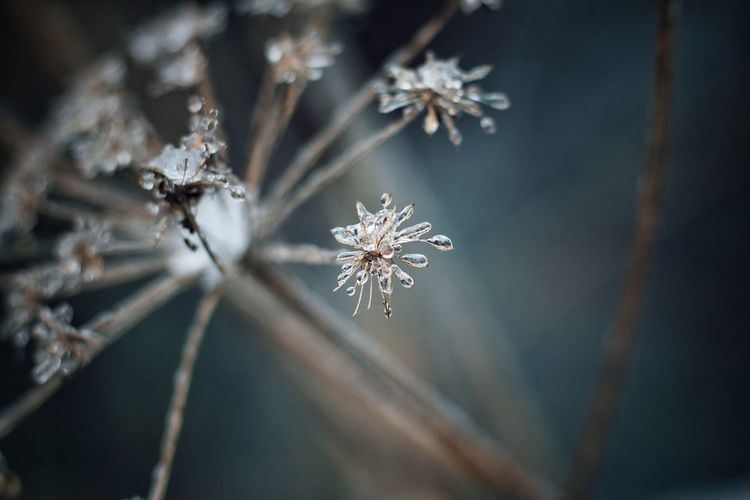 Winter Close-up Snow Cold Temperature Nature No People Frozen Beauty In Nature Streamzoofamily EyeEm Gallery Outdoors