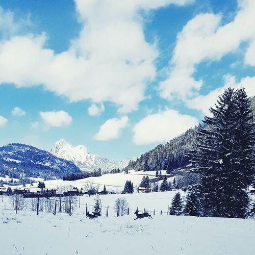 Austria ♡