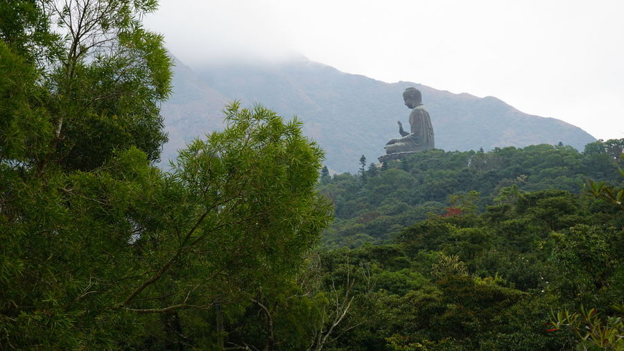 Big Buddha Green HongKong Mountain View Nongping360 Hongkong Trees