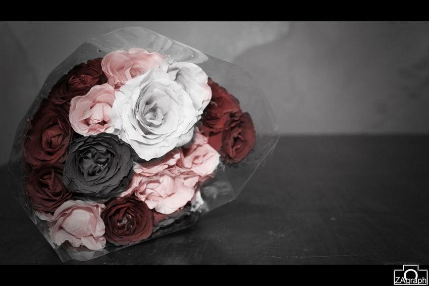 The EyeEm Facebook Cover Challenge Photography Rosé Popular Photos