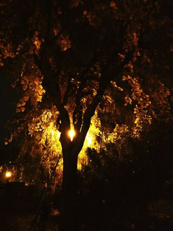 No People Beauty In Nature Tree Outdoors Autumn Tree Illuminated Night Park Night Park