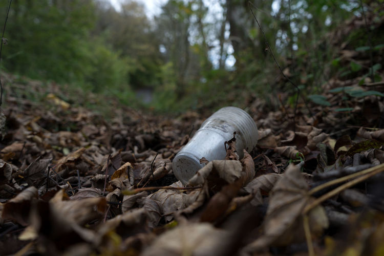 Plastic waste in nature setting