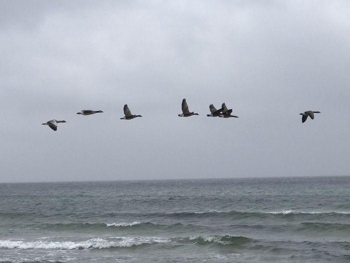 Bird Sea Animal