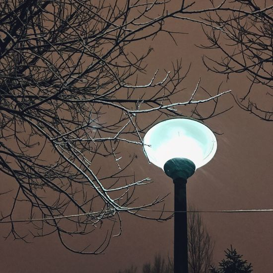Bare Tree Low Angle View Tree Branch Lighting Equipment No People Electricity  Nature Moon Outdoors Sky Architecture Street Lamp Day