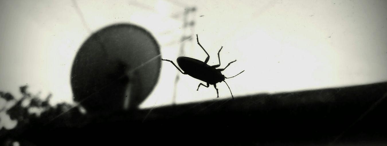 Beetle Bugs Black And White Black & White Eyem Nature Lover Eyem Bug Hater Window View Window Taking Photos