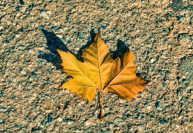 Leaf Alone Leaf