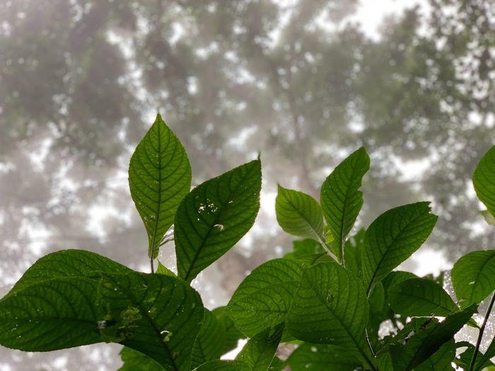 Cloud Leaf