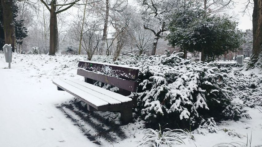 Winter Snow Cold Temperature Tree Weather Nature Beauty In Nature Tranquility Growth Tranquil Scene Snowing Day Outdoors No People Scenics Landscape Bench Snow ❄ Winter Winter Park Maastricht Holland Nature