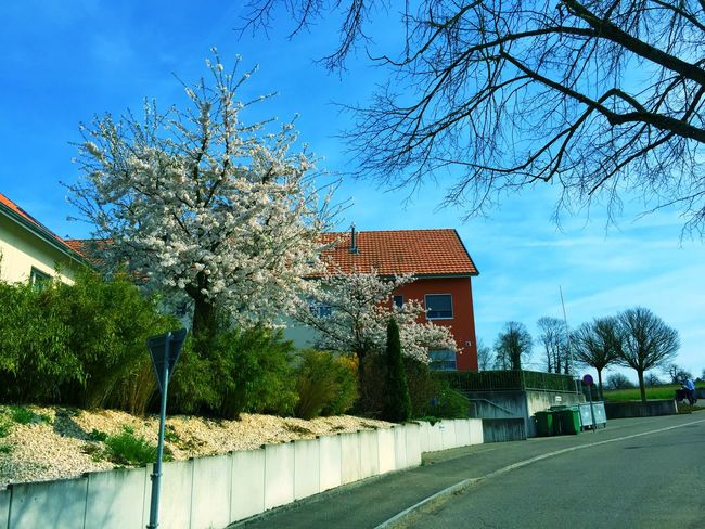 2015 Spring Architecture Bare Tree Beauty In Nature Branch Building Exterior Built Structure Clear Sky Day Growth Nature No People Outdoors Sky Spring 2015 Tree