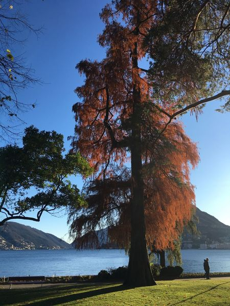 Tree Water Scenics Mountain Outdoors Day Switzerland Lugano Lugano Lake Autumn Colors Autumn Leaves Beautifulday Lake View Lakeview Branch Crisp Sky Walk