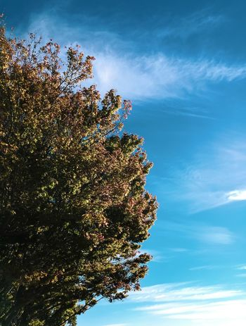 Nature Sky Cloud - Sky Low Angle View Nature Day Plant No People Growth Beauty In Nature Outdoors Tree Built Structure Sunlight Blue Illuminated Tranquility Architecture Vulnerability  Scenics - Nature Decoration