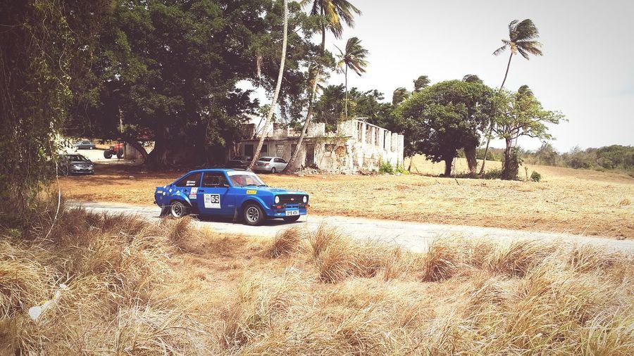 Rallybarbados Islandlife Barbados Enjoying The Sun Landscape Canefields