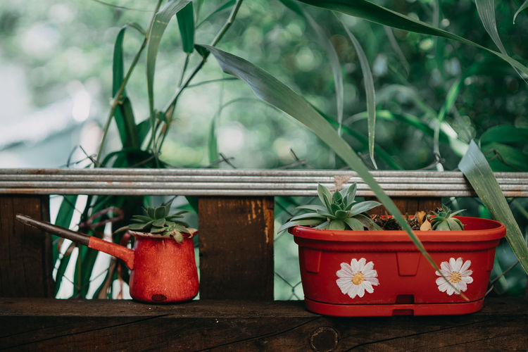 Abstract Basket Beauty In Nature Close-up Container Day Flower Pot Focus On Foreground Food Food And Drink Freshness Garden Green Color Growth Leaf Nature No People Outdoors Plant Plant Part Potted Plant Red Wood - Material