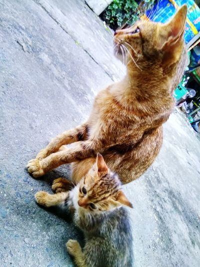 My feline friend.. father and son Cats Of EyeEm Cats 🐱 Felinefriends Felinefascination Felinefamily