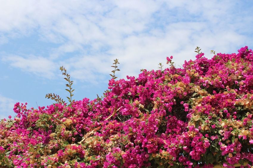 Flower Beauty In Nature Nature Sky Springtime