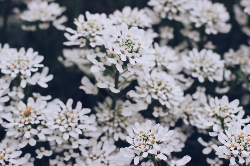 Flowering Plant Flower Plant Freshness Fragility Vulnerability  White Color Beauty In Nature Growth Nature No People Flower Head Close-up Petal Blossom Day Springtime Outdoors
