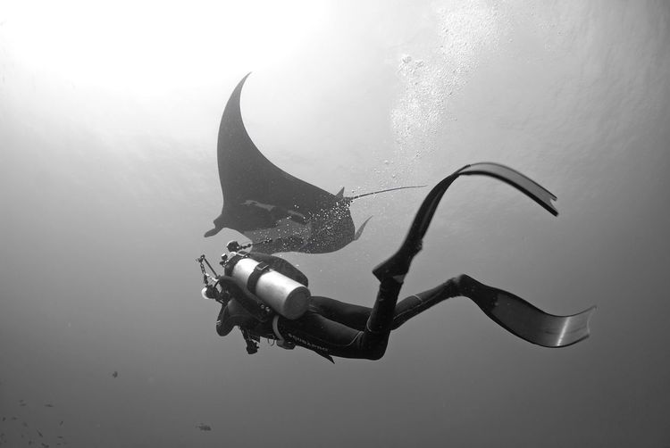 Person Scuba Diving Undersea