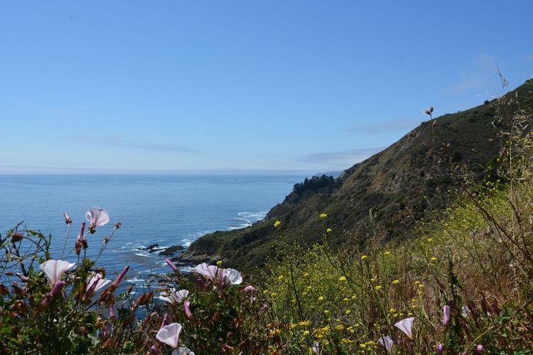 Water Beauty In Nature Scenics - Nature Rock No People Flower Horizon Sea Coastline Monterrey California Coast Flowering