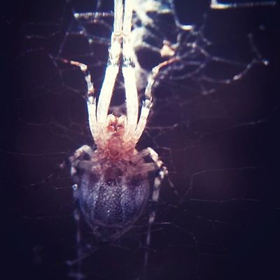 Spider Monster Igersmyanmar Narcoticphotography photooftheday instaphotography yangon