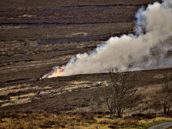 Gamekeeper Grouse Moor Burning Off