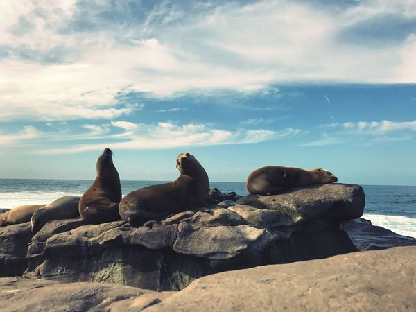 Sky Sea Nature Water Beauty In Nature Horizon Over Water Cloud - Sky Beach Rock - Object No People Tranquility Tranquil Scene Scenics Day Outdoors Animal Themes Mammal Sea Lion
