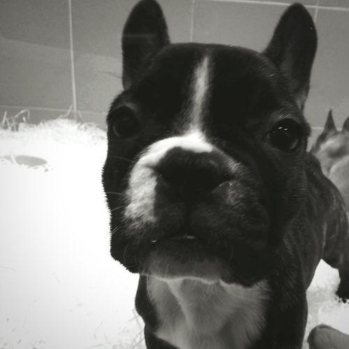 Dogslife Dog Portrait Intheeye Good Morning! Urbanphotography Portrait Photography Take A Break