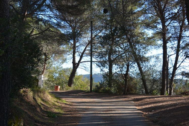 Tree No People Outdoors Nature Forest Sky Beauty In Nature Chemin De Provence Côte D'Azur Trompe-l'œil Arbre Central Eyemphotography EyeEm Diversity EyeEmNewHere Photographe Photographer Nikon D7100 Nikon Jpho06 France🇫🇷